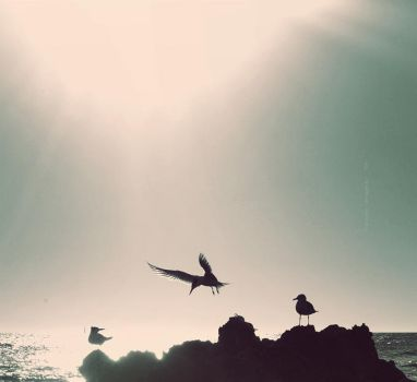 Freedom is my fantasy by wind-swept