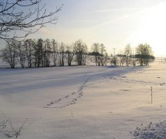 Winterscape 08 by mimustock