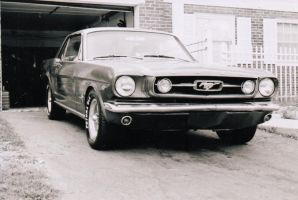 Mustang by Photo83