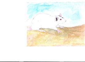 Albino Rat by Ratstien