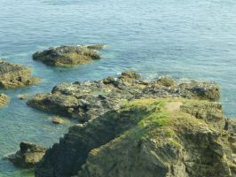 Lizard Point: View 35 by yaschaeffer