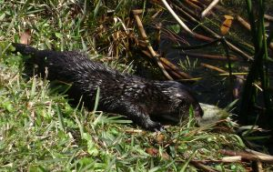 Otter 4 by CanisCamera