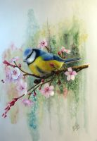 Blue Tit and Plum Blossoms by SkwidVishus