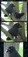 A Murder of Crows Plushies by VenturertheHybrid