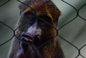Singe by SemioticPhotography
