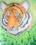 Tiger Prize by HDevers