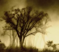 As the fog sets in.. by seraphel