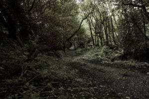 woodland road by WillJH