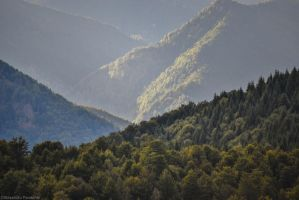 Green ocean in Transalpina by AlecsPS