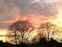 Sunset and tree Skyline Thornaby by illusiveexistence