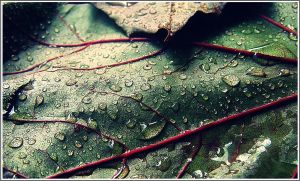 .green n' red leaf. by GrotesqueDarling13