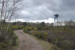 A walk in Horsell Common by hardbodies