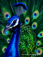 The Beauty of the Peacock by Jullelin