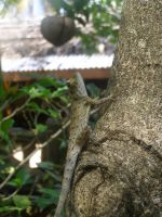 Lizard in Thailand by alfeign