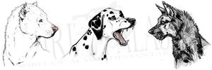 Dogs Scetches by Spirit-Of-Alaska