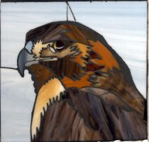 Red-Tailed Hawk by FireKat