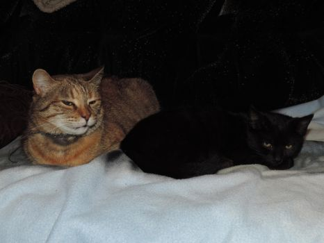 Micia and Blacky 2 by MiciaCat