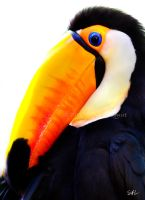 Toucan by AzureWindProductions