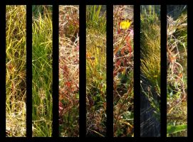 Grass Montage by katherineannecarlson