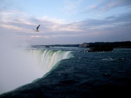 Seagull of the Falls by MegZakuro