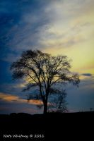 Morning Silhouette by mr-sarcastic1984