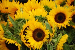 Sunflowers by 10000Greetings