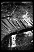 Wooden Pathways  (02) (Black and White) by SKiNBuS