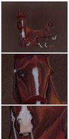 Saddlebred by JNFerrigno