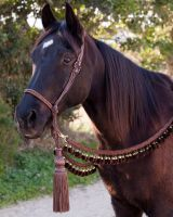 Bedouin Hackamore in Brown 2 by tackistry