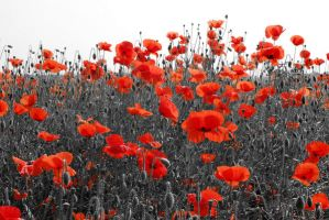 Gray and Red field by Jasmin-jewel