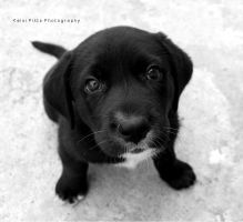 adorable Puppy by KPPhoto