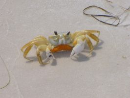 Crab by Ayanami-The-Nuff