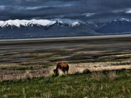 bison by zois-life