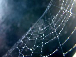 Spider Web.. one.. by smileyphotography