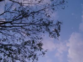 Tree and Sky by azmosis