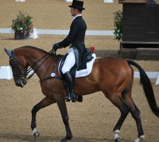 Dressage 39 by equinestudios