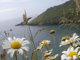 Daisies over the channel by Lianne-Issa