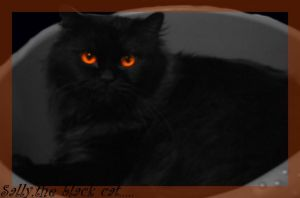 Sally,the cat... by JezzabelR