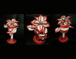 Red and White Cup Poinsettia by Keith60153