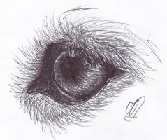 Wolf Eye by Syska129