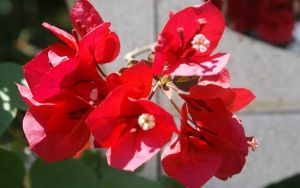 RED FLOWERS by JUET