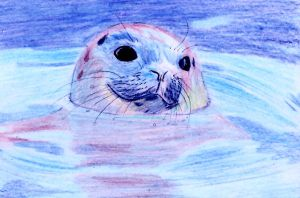 .:Common Seal:. -:Card:- by Lutra-Gem