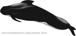 Pilot Whale Adoption for Cobweb-Forests by WeisseEdelweiss
