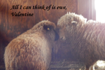 All I can think of is ewe, Valentine by DragonHaven42