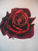 A Red Red Rose by Kopchet