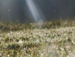 Morning dew:) by PArt87