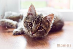 The Kitty Series - 2 by NXcamera