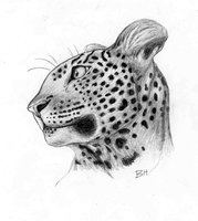 Leopard face by Tozi