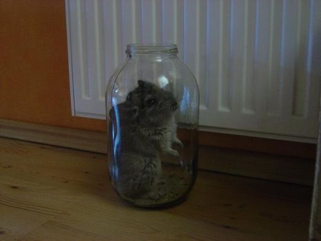 Chinchilla In The Jar by spitfireee-bop