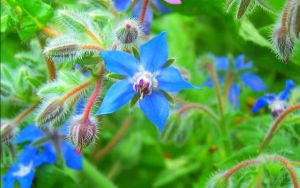 Nature's Flower by cixelsiD-1